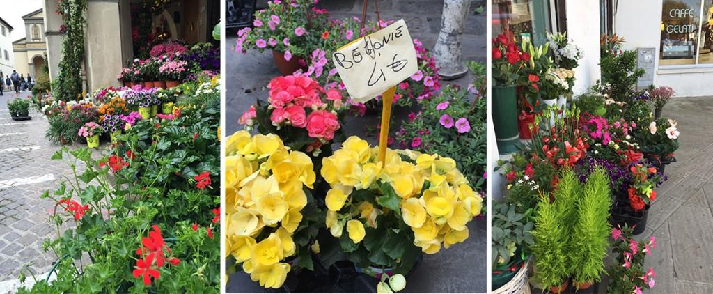 Flowers2_Italy